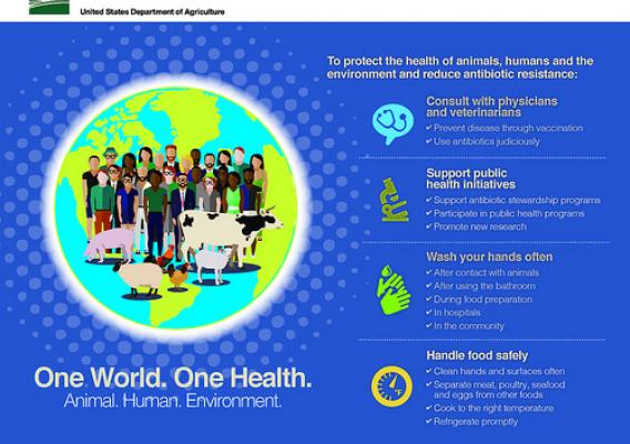 One World. One Health. Animal. Human. Environment infographic