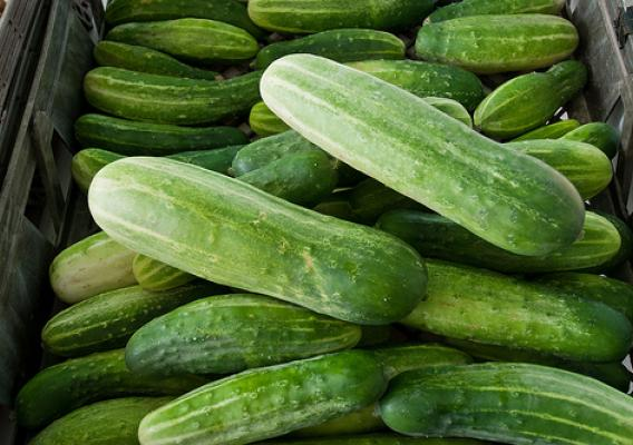 Beginning in 2014, crop insurance will be available as a pilot insurance program for cucumbers in Delaware, Illinois, Indiana, Maryland, Michigan, North Carolina and Texas.