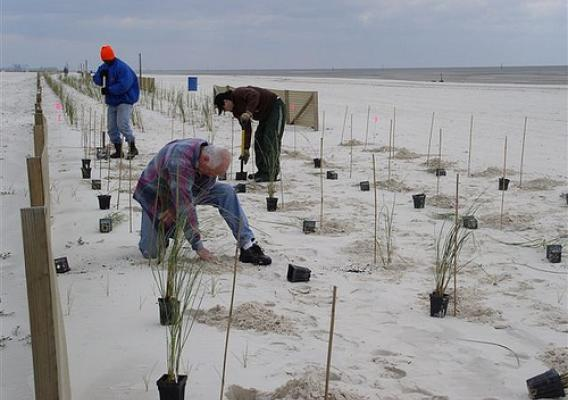 Mississippi's Gulf Coast is a major environmental and economic resource. Conservationists have worked to improve beaches and coastal rivers, including the planting of sea oats in past years.