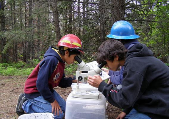Children looking through microscopes in a forest.