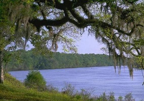 View of the Apalachicola River from Fort Gadsden located on the river's east bank. The site is the only historic landmark listed on the National Register of Historic Places in the U.S. Forest Service's Southern Region.  Photo Credit: Forest Service photo