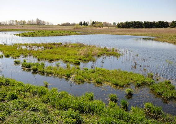 This 12-acre constructed wetland provides wildlife habitat for migrating waterfowl and a nesting area for animals.