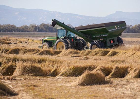 A California farmer harvests his rice field.  Photo by Robert Parkhurst, Environmental Defense Fund (used with permission).