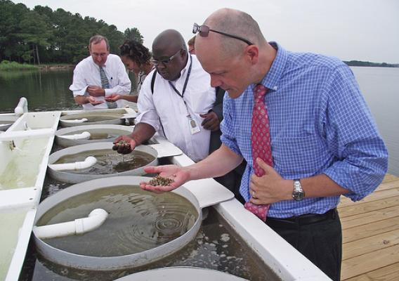 Holding a handful of oyster spat: It takes about two years in Maryland to grow an oyster. Standing next to Acting Under Secretary Doug O'Brien (foreground)  is Terrance Taylor, representative for Congressman Steny Hoyer; Letitia Nichols, Business & Cooperative Program Director and Michael Dee, President, The Patapsco Bank. USDA has guaranteed a bank loan that will help the oyster operation grow and also protect Chesapeake Bay. USDA photo.