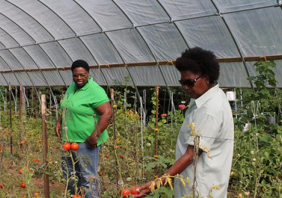 Priscilla Williamson, NRCS supervisory district conservationist, (left), enjoys seeing all the varieties of tomatoes ripening in the newly constructed seasonal high tunnel.