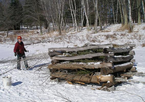Recycled trees placed in a fish crib. (U.S. Forest Service)