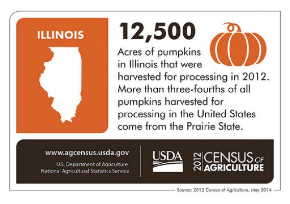 With more than 12,500 acres, Illinois growers account for more than three-fourths of all pumpkins harvested for processing in the United States. Check back next Thursday for more interesting information on another state from the 2012 Census of Agriculture!