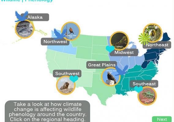 Screenshot of the climate change effects education module explaining changes in wildlife phenology observed and expected with climate change.  This section has an interaction that explores observed phenological changes for different regions.