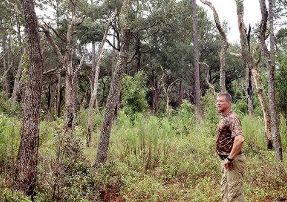 Working Lands for Wildlife (WLFW) Initiative participant Steve Barlow looks over the longleaf pine forest on his property in Levy County, FL.