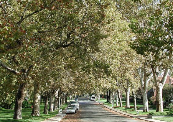 In addition to improving the look and feel of a neighborhood, trees help lower energy costs, conserve landscape water use, reduce storm-water runoff and store carbon. (Forest Service, Pacific Southwest Research Station photo).