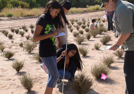 Pueblo of Acomo students measure and record plant heights and crown diameters.