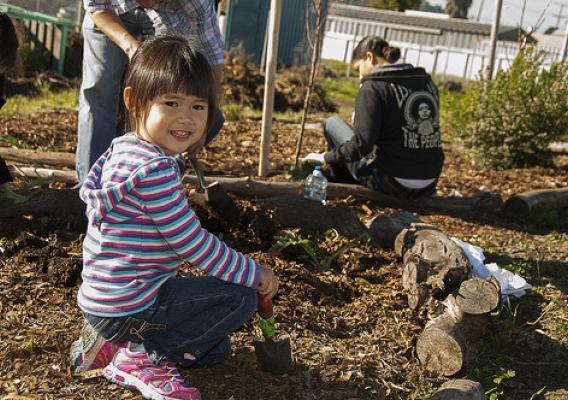 Maya Kwok, 3, helps during a planting project at the Richmond, Calif., Edible Forest as part of the Martin Luther King Jr. Day of Service. Maya is the daughter of Alfred Kwok, director of operations for the U.S. Forest Service's Pacific Southwest Research Station. (US Forest Service photo)