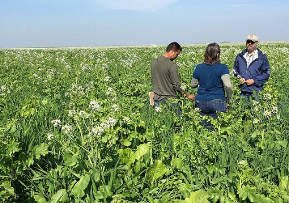 NRCS staff participated in a cover crop field day in Merced County, California as part of its tour of the state to look at ways farmers can reduce greenhouse gas emissions and store carbon on their lands. NRCS photo by Kari Cohen.