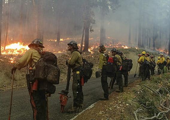 Panorama of the Geronimo Interagency Hotshot Crew along forest road