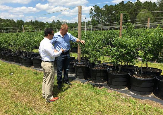 Veterans Farm founder Adam Burke taking AMS Veteran Program Manager Yowei Peralta on a tour of the organization's blueberry farm