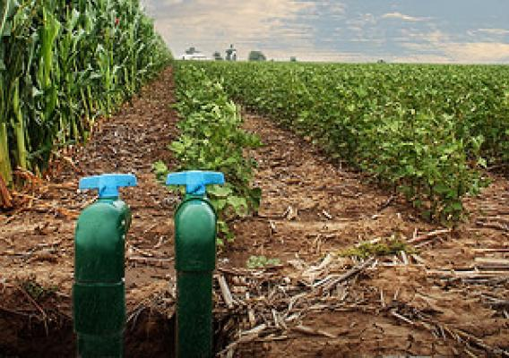 Micro-subsurface drip irrigation