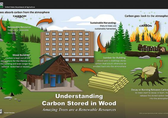 Understanding Carbon Stored in Wood infographic