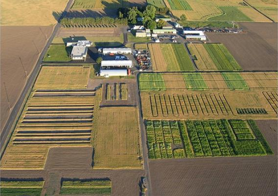 Aerial view of GRACEnet test plots