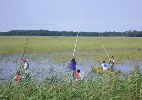 To help meet the needs of Tribal Nations and provide transparency and pricing information, we recently developed the National Tribal Grown, Produced or Harvested report. Pictured here is a Native American Leech Lake Band of Ojibwe youth tending to a rice crop on the Leech Lake Reservation in Minnesota