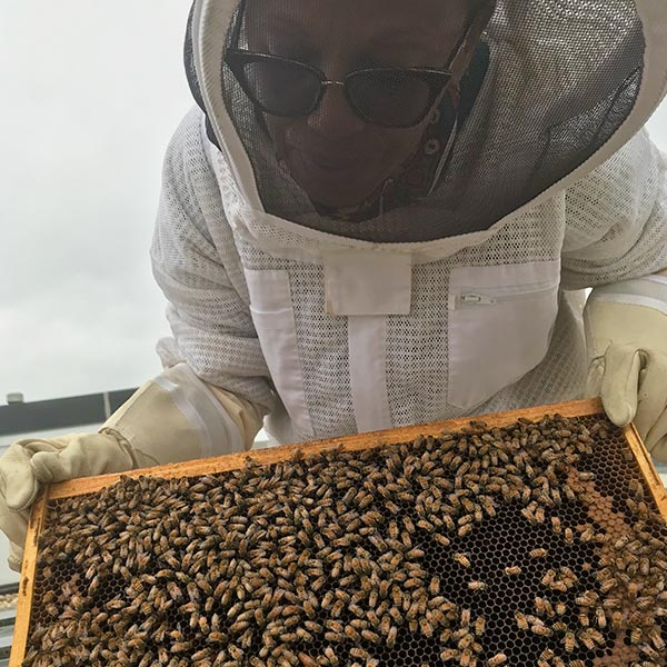 USDA rooftop hive